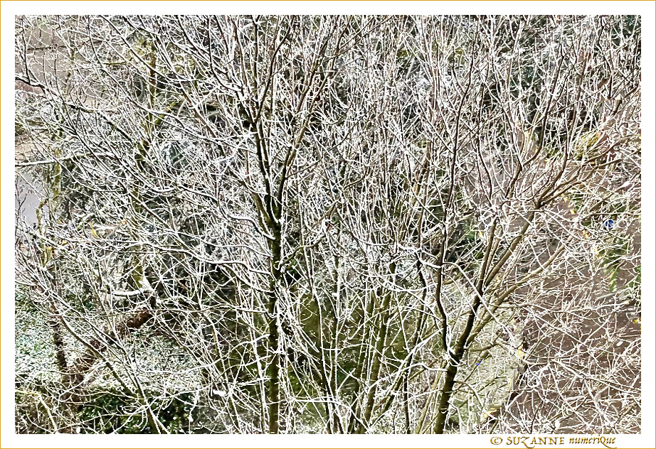 © SUZANNE   ARBRES_NEIGE_3676